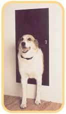 Dog Door For Kennel
