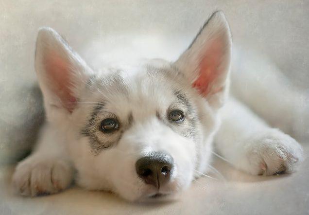 How To Teach Your Pet To Use A Pet Door Solo Pet Doors