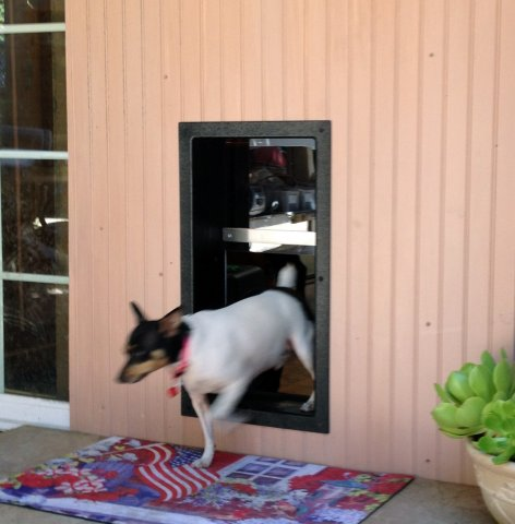 PET DOOR WALL INSTALL & Doggy Door Pictures Kitty Pictures - Solo Pet Doors pezcame.com