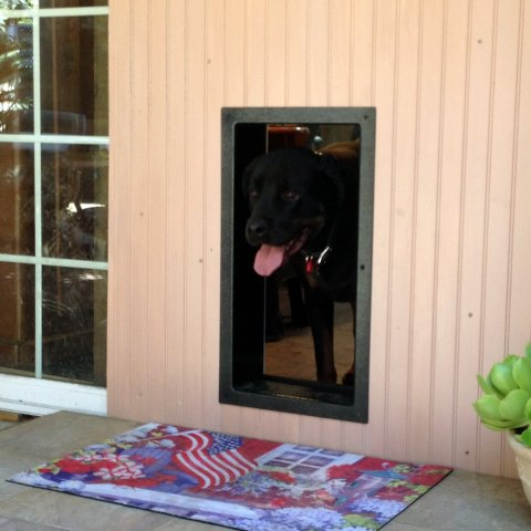 & Doggy Door Pictures Kitty Pictures - Solo Pet Doors Pezcame.Com